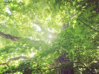 森を散策の写真・画像素材[2439554]