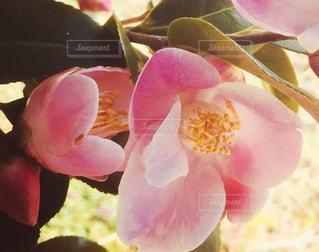 花のクローズアップの写真・画像素材[2446923]