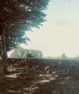 ベンチ,樹木,木陰,土手,オランダ,フィルム,フィルム写真,フィルムフォト,フースデン
