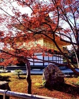 金閣寺の写真・画像素材[2511457]