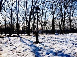 雪に覆われた森の写真・画像素材[2811647]