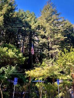 森の中の木の写真・画像素材[3139895]