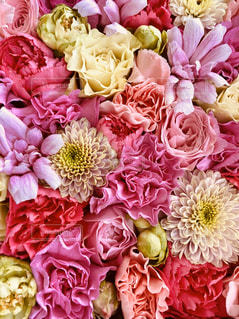 花のクローズアップの写真・画像素材[3195197]