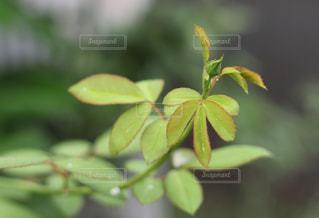 緑の写真・画像素材[453985]