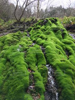 地を這う緑の景色の写真・画像素材[3193823]
