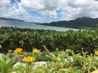 水域の前の黄色い花の写真・画像素材[2442042]