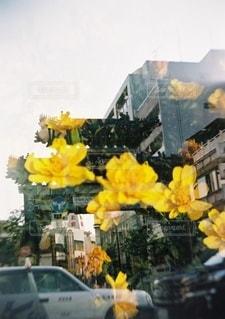 花,屋外,黄色,横浜,フィルム,多重露光,中華街,草木,フィルム写真,フィルムフォト
