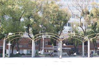 公園,鳥,鳩,休日,街中,名古屋,栄,愛知,わたしの街