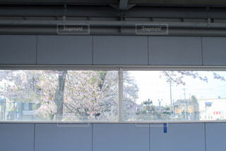 桜,植物,駅,お洒落,ホーム