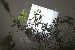 インテリア,植物,オリーブ,天窓,デザイナー