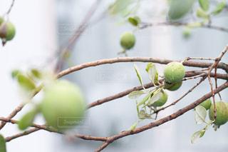 木の実と雫 - No.849623