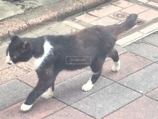 猫,白,黒,歩く,茶色,道路,グレー,日中