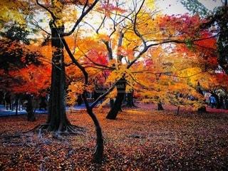 京都 東福寺の紅葉の写真・画像素材[2512397]