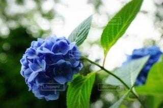 花のクローズアップの写真・画像素材[3380561]