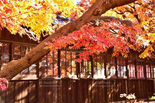 秋の昼下がりの写真・画像素材[2817416]