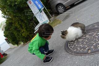 子ども,猫,動物,道路,仲良し,ペット,人物,マンホール,遊び,男の子,息子,にらめっこ,ネコ,内緒話,猫とこども