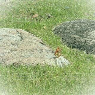 草,蝶々,フィルム,フィルム写真,フィルムフォト