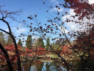 紅葉,フィルム,フィルム写真,オータム,日本の風景,フィルムフォト