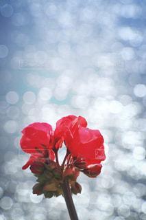 海,花,赤,反射,キラキラ,カーネーション,フィルム,フィルム写真,フィルムフォト