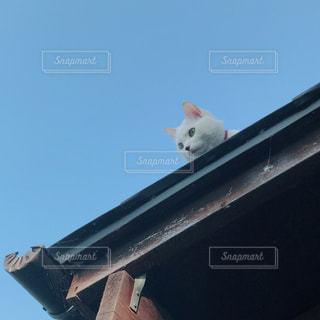 空と猫の写真・画像素材[2451249]