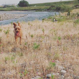犬,風景,屋外,フィルム,フィルム写真,フィルムフォト