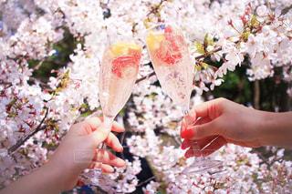 桜,フルーツ,グラス,乾杯,おしゃピク,ドリンク,女子会,シャンパン,ホリデー,カメラ旅,フォトジェニック