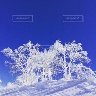 雪の写真・画像素材[194245]