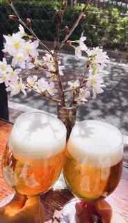 桜,グラス,ビール,泡,目黒川,乾杯,ドリンク