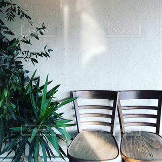 椅子と植物の写真・画像素材[2723842]