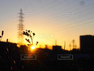 自然,風景,空,屋外,太陽,夕暮れ,シルエット,光,日の出,明るい