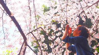 女性,風景,公園,花,春,桜,屋外,樹木,人,写真,桜満開