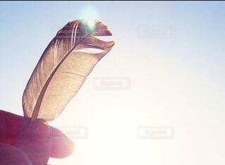 空,太陽,手,光,人物,外,羽,ポートレート,ライフスタイル,手元