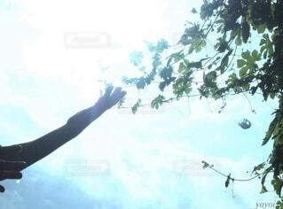 空,木,太陽,光,手持ち,人物,ポートレート,ライフスタイル,手元