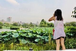ハスの池と女の子の写真・画像素材[2588080]