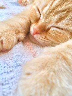 猫,動物,かわいい,ねこ,ペット,子猫,人物,ネコ,ベッド