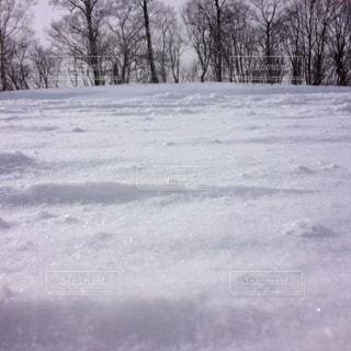 キラキラした雪の写真・画像素材[2959095]
