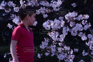 子ども,1人,桜,木,花見,鮮やか,お花見,草木,桜の花,さくら
