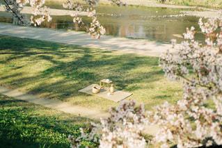 カフェ,春,桜,コーヒー,京都,花見,河原,ピクニック,フィルム,川沿い,フィルム写真,フィルムフォト