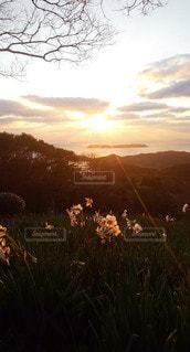 自然,風景,海,空,花,夕日,太陽,夕暮れ,景色,光,熊本,日本,牛深,天草市,水仙公園
