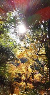 空,秋,太陽,日光,光,樹木,熊本,銀杏,日本,景観,山鹿市,日輪寺