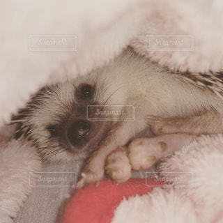 かわいい,ハリネズミ,小動物,フィルム,フィルム写真,フィルムフォト