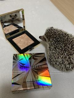 かわいい,鏡,オシャレ,ハリネズミ,美容,コスメ,化粧品,化粧