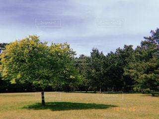 風景,公園,木,屋外,太陽,部屋,光,道,明るい,フィルム,通り,フィルム写真,フィルムフォト