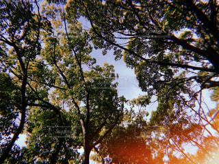 風景,公園,木,屋外,太陽,光,歩道,明るい,フィルム,フィルム写真,フィルムフォト