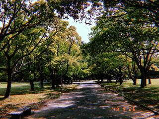 公園,木,太陽,道,歩道,フィルム,通り,フィルム写真,フィルムフォト
