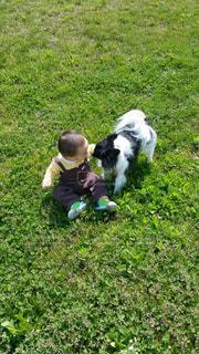 緑の野原にいる小さな子供と犬の写真・画像素材[2706440]