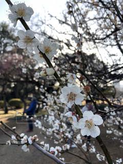 木に花の写真・画像素材[3020694]