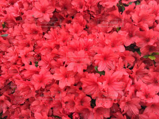 春 - No.533125
