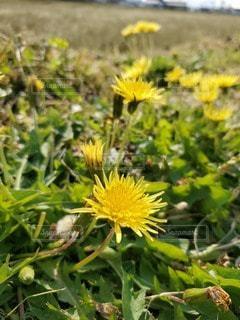緑の葉の黄色い花の写真・画像素材[3210870]