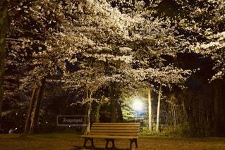 空,公園,花,桜,森林,屋外,ベンチ,花見,夜桜,樹木,イベント,草木
